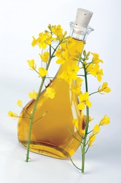 canola_oil_benefit