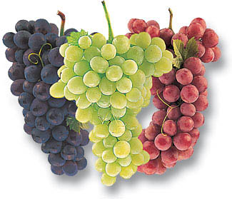 grape-varieties