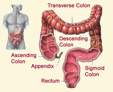 colon_health_healthy_body
